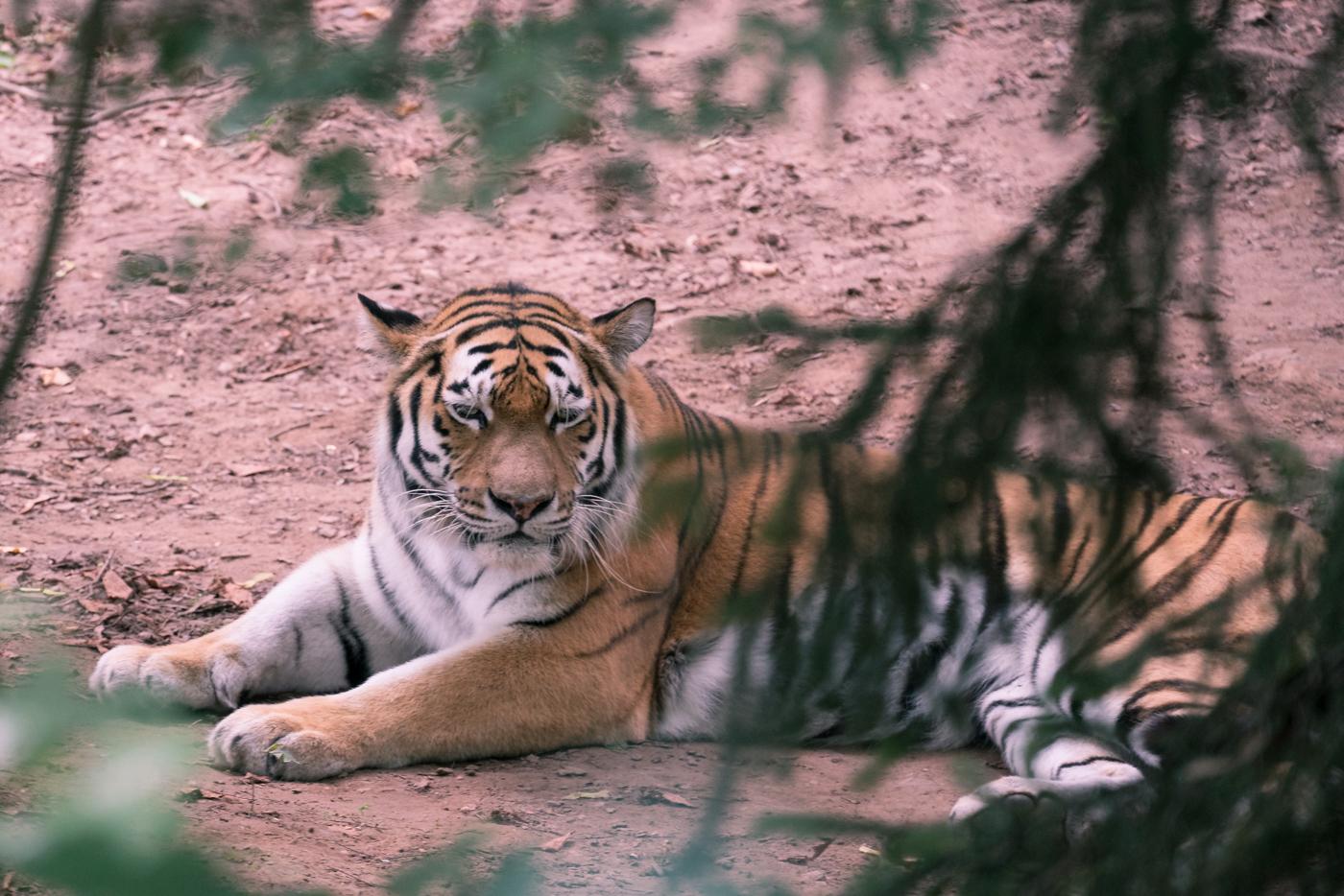Landauer Zoo