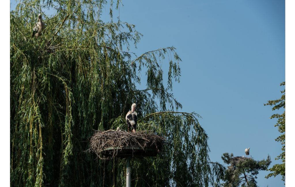 Vogelpark Roxheim