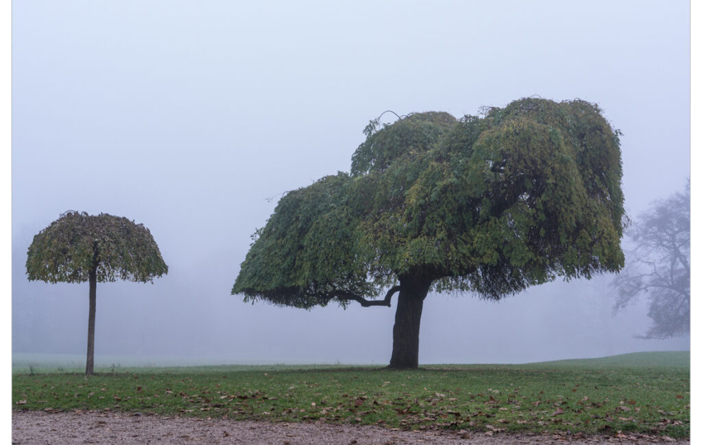 Herrnsheim im Nebel