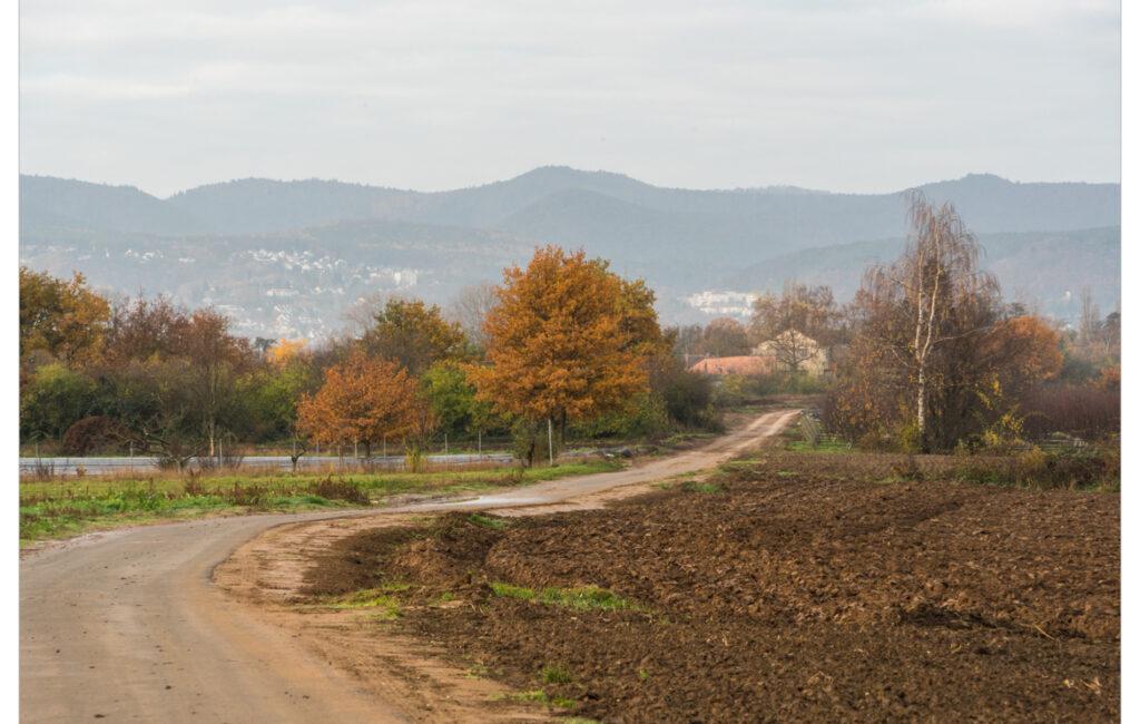 Lambsheim-Mittelgewann